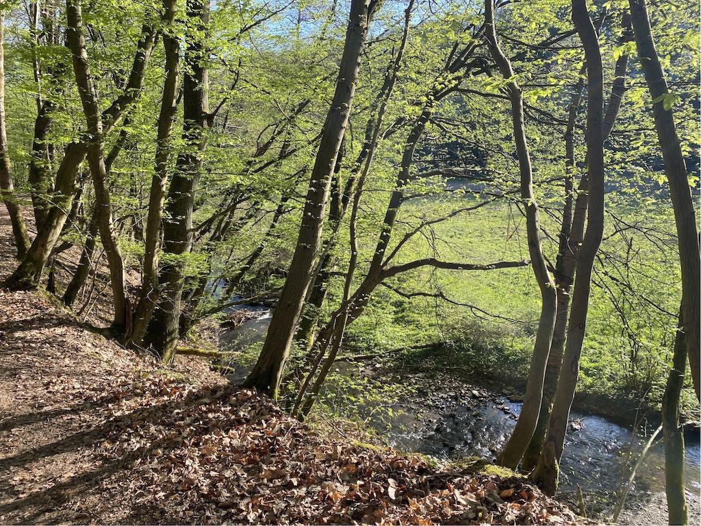 Weg zur Hohen Wurzel - Mühlenwanderweg Marthinsthal
