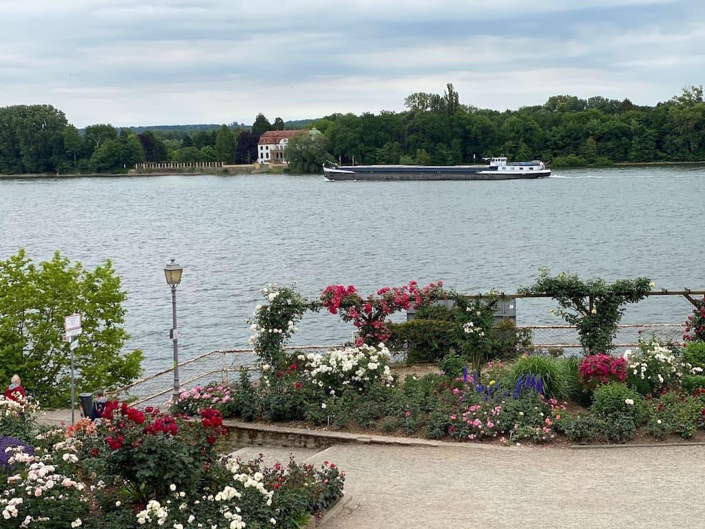 Rosenstadt Eltville am Rhein
