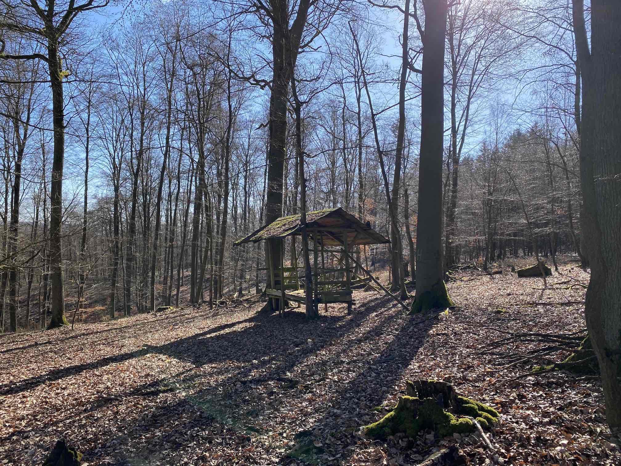 Futterstelle im Wald